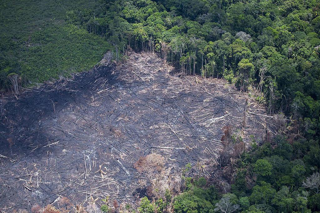 operação para combater desmatamento na Amazônia